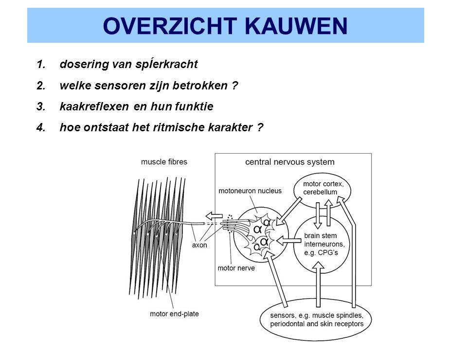 OVERZICHT KAUWEN 1.dosering van spÍerkracht 2.welke sensoren zijn betrokken ? 3.kaakreflexen en hun funktie 4.hoe ontstaat het ritmische karakter ?