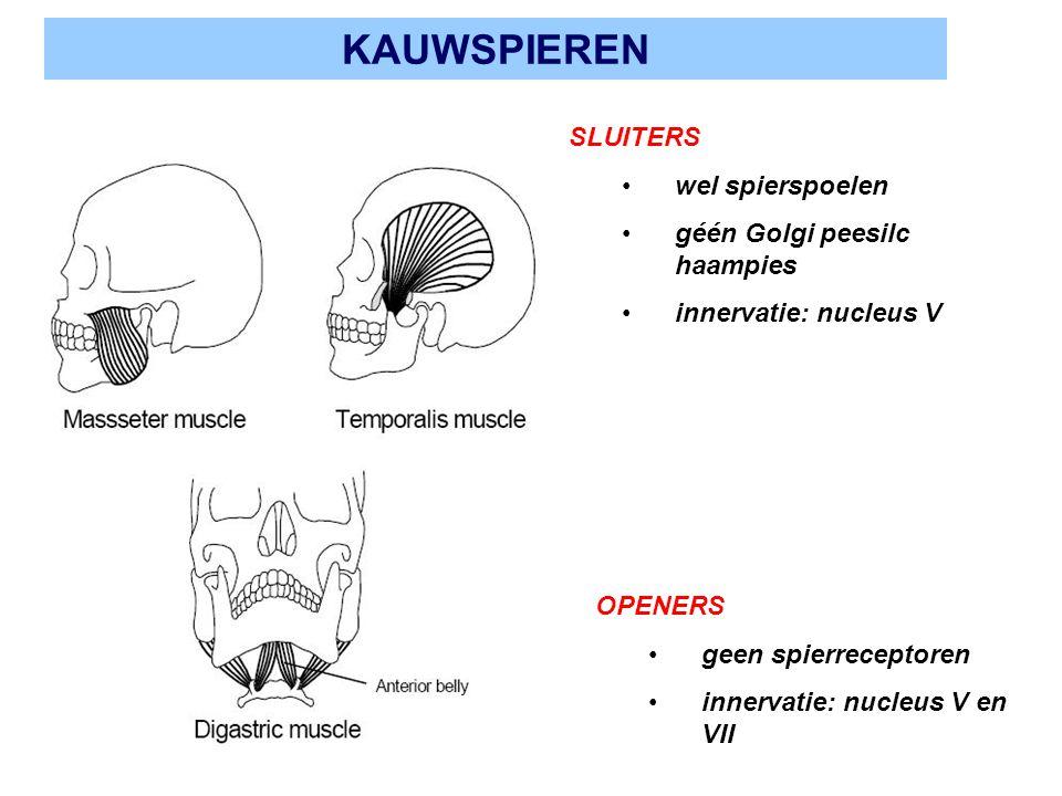 KAUWSPIEREN SLUITERS wel spierspoelen géén Golgi peesilc haampies innervatie: nucleus V OPENERS geen spierreceptoren innervatie: nucleus V en VII