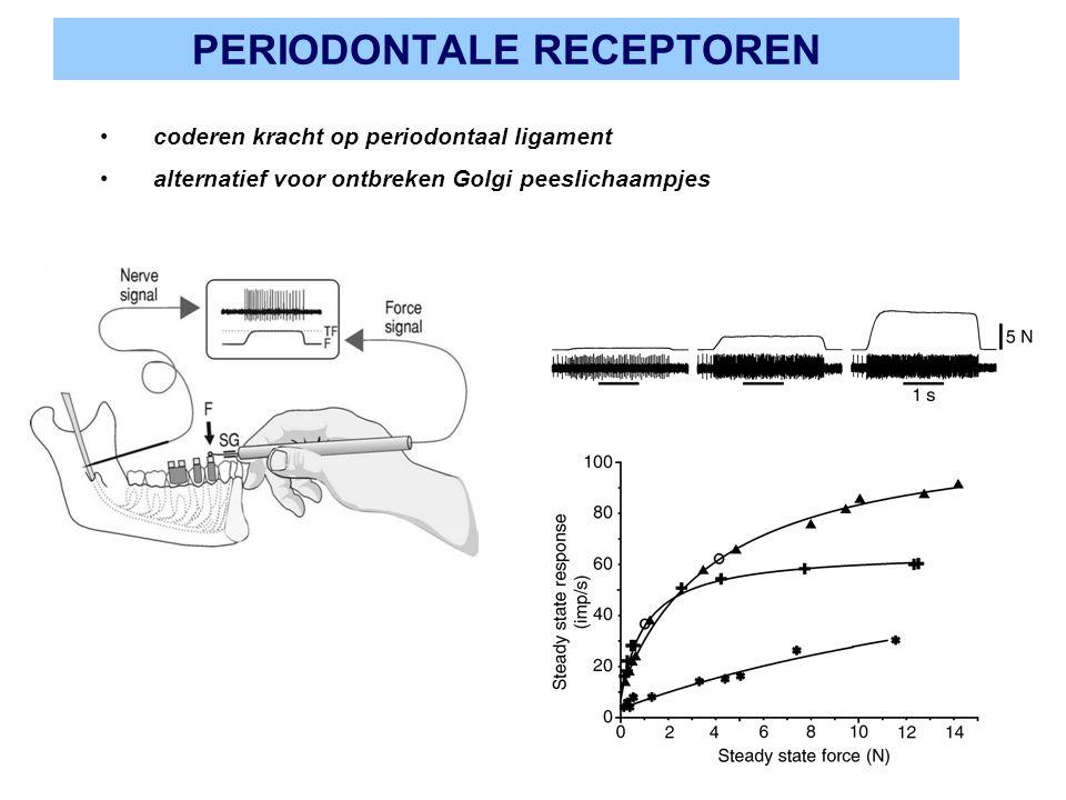 PERIODONTALE RECEPTOREN coderen kracht op periodontaal ligament alternatief voor ontbreken Golgi peeslichaampjes