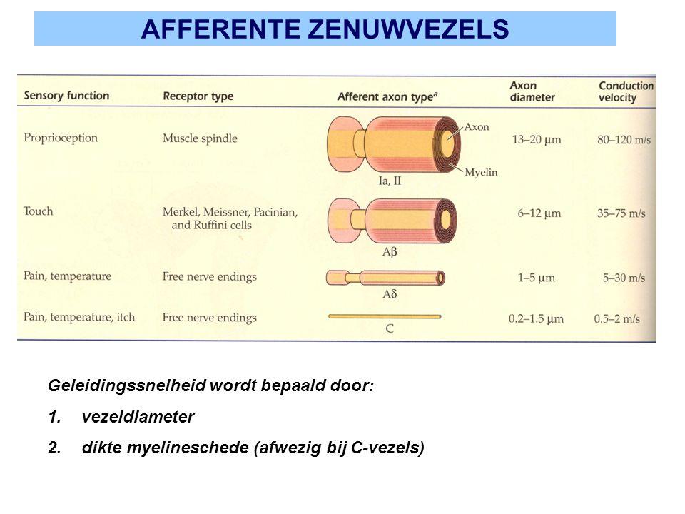 AFFERENTE ZENUWVEZELS Geleidingssnelheid wordt bepaald door: 1.vezeldiameter 2.dikte myelineschede (afwezig bij C-vezels)
