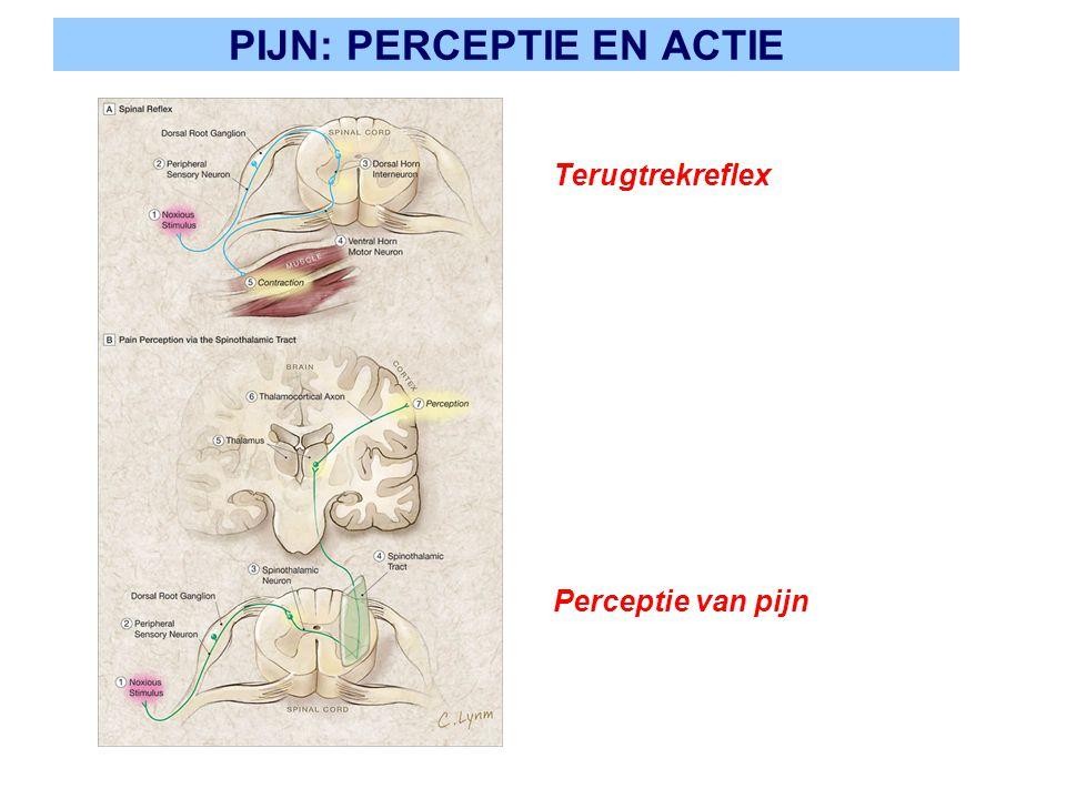 PIJN: PERCEPTIE EN ACTIE Terugtrekreflex Perceptie van pijn