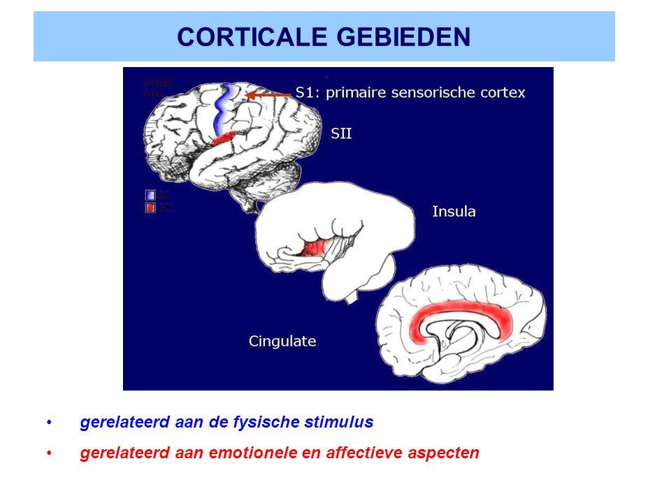 CORTICALE GEBIEDEN gerelateerd aan de fysische stimulus gerelateerd aan emotionele en affectieve aspecten