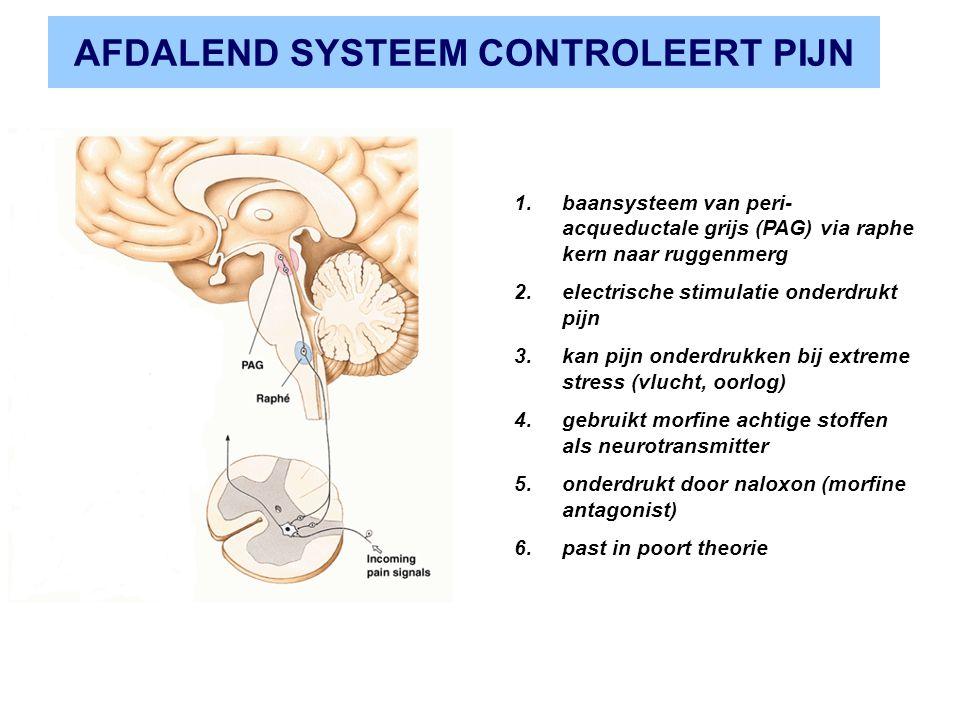 AFDALEND SYSTEEM CONTROLEERT PIJN 1.baansysteem van peri- acqueductale grijs (PAG) via raphe kern naar ruggenmerg 2.electrische stimulatie onderdrukt