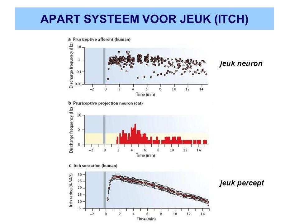 APART SYSTEEM VOOR JEUK (ITCH) jeuk percept jeuk neuron