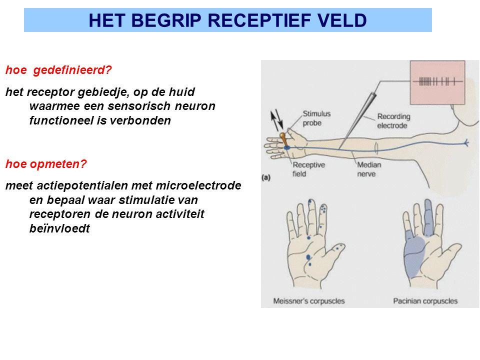 HET BEGRIP RECEPTIEF VELD hoe gedefinieerd? het receptor gebiedje, op de huid waarmee een sensorisch neuron functioneel is verbonden hoe opmeten? meet