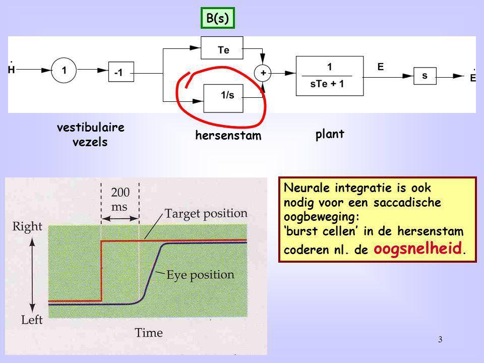 3 vestibulaire vezels hersenstam plant Neurale integratie is ook nodig voor een saccadische oogbeweging: 'burst cellen' in de hersenstam coderen nl. d