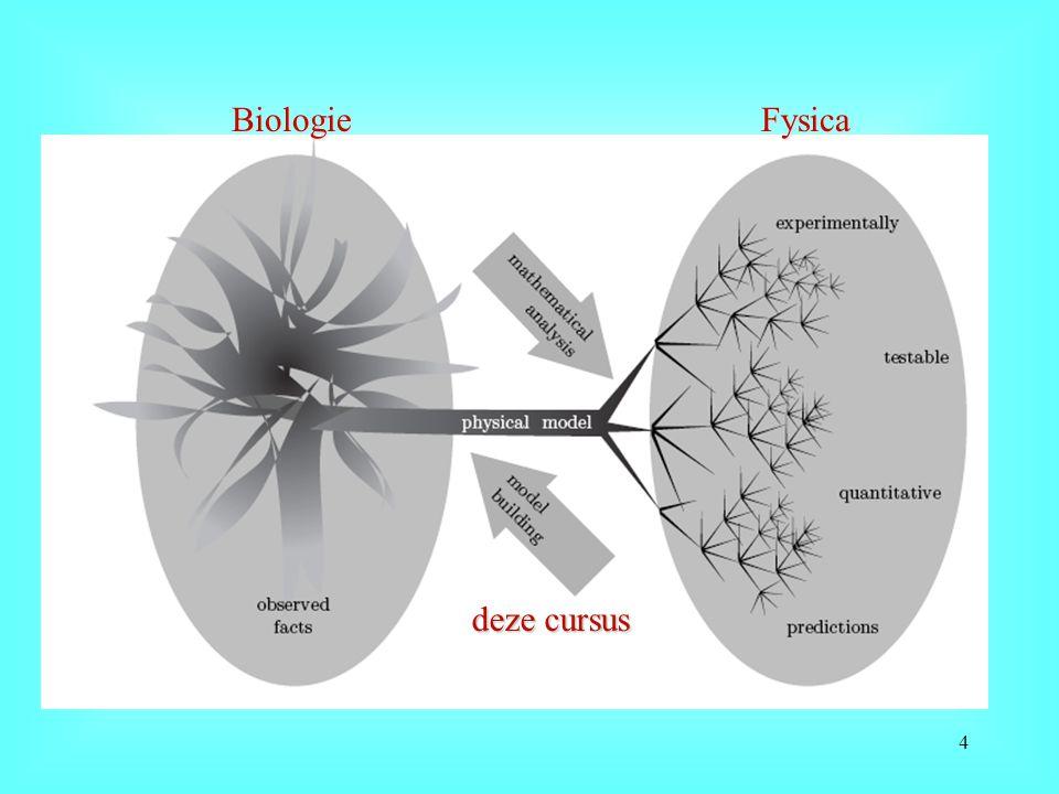 Een zich delende eukaryoot: de gistcel n=nucleus v=vacuole m=mitochondria 15