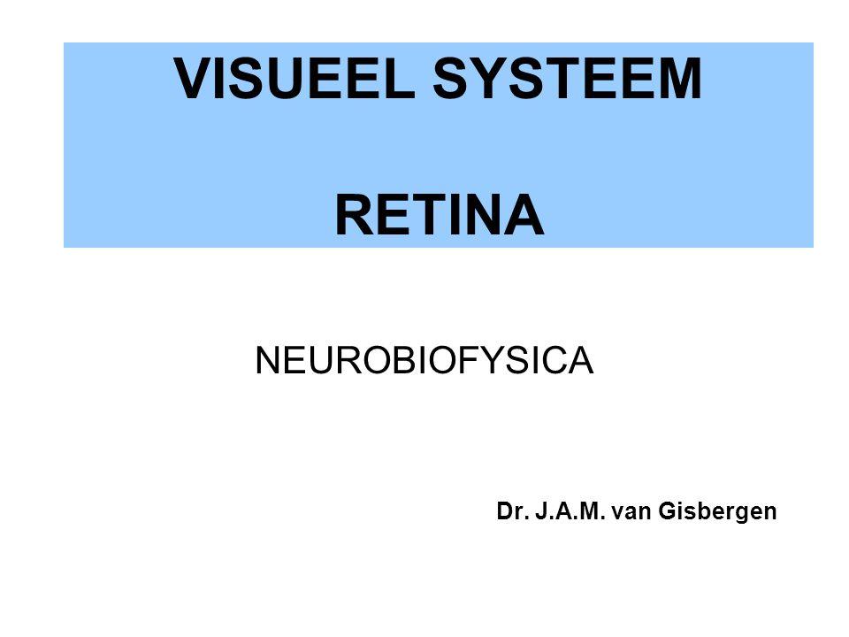 VISUEEL SYSTEEM RETINA NEUROBIOFYSICA Dr. J.A.M. van Gisbergen