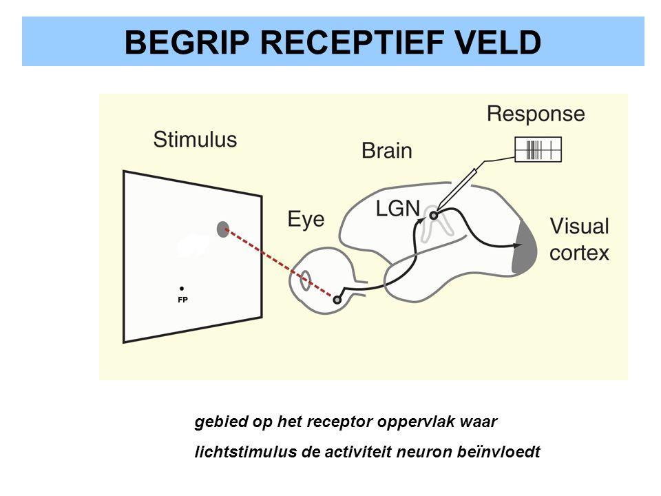 BEGRIP RECEPTIEF VELD gebied op het receptor oppervlak waar lichtstimulus de activiteit neuron beïnvloedt