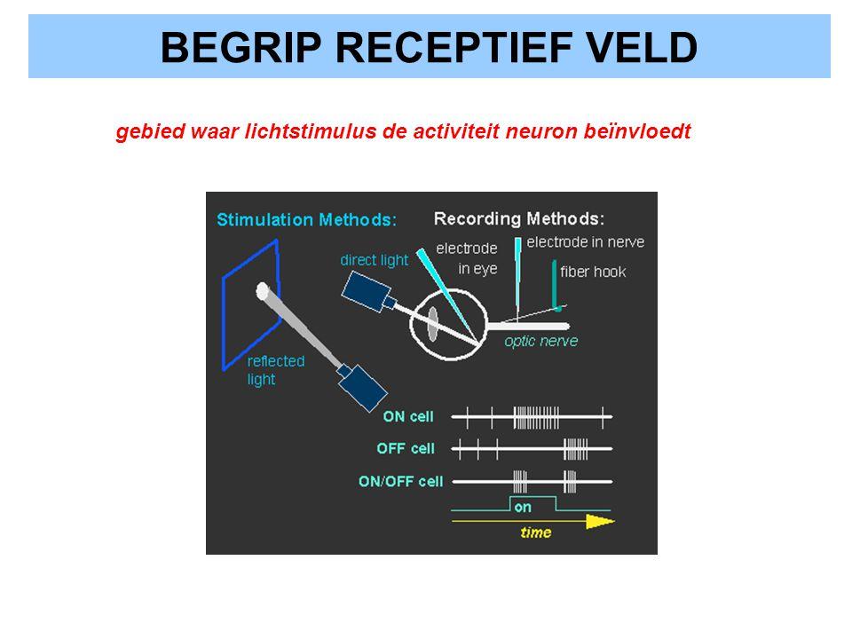 BEGRIP RECEPTIEF VELD gebied waar lichtstimulus de activiteit neuron beïnvloedt