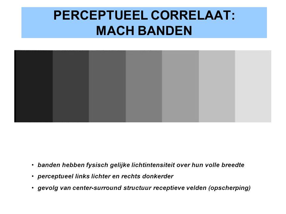 PERCEPTUEEL CORRELAAT: MACH BANDEN banden hebben fysisch gelijke lichtintensiteit over hun volle breedte perceptueel links lichter en rechts donkerder