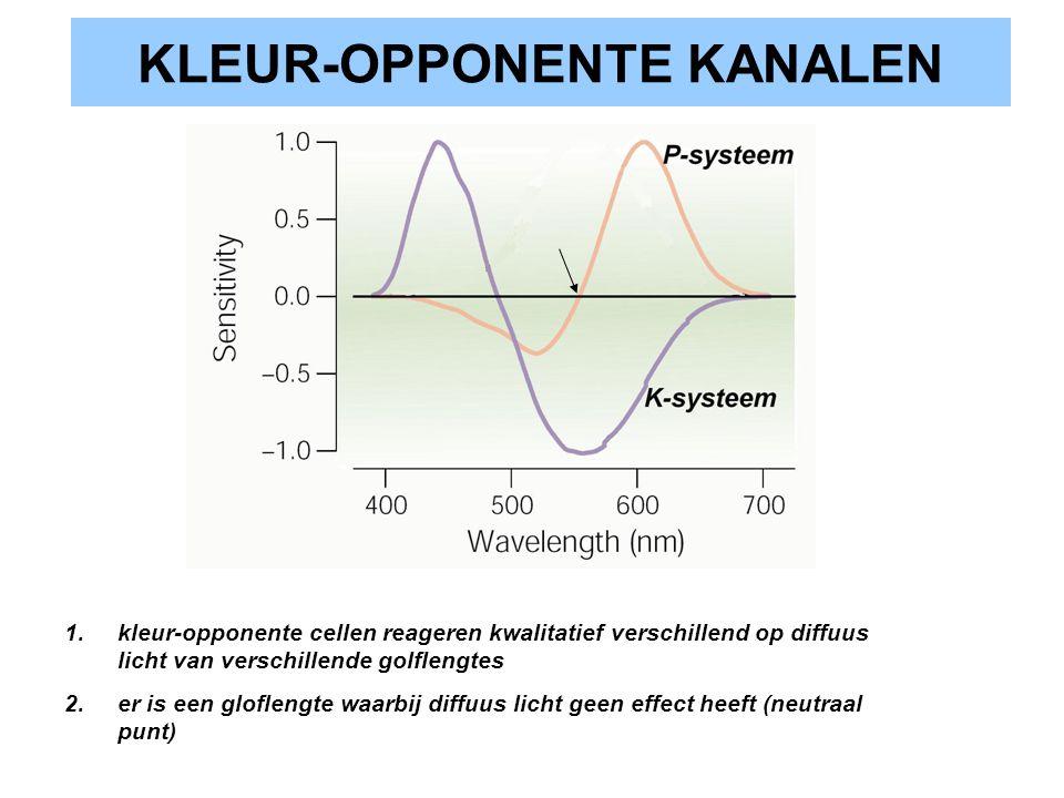 KLEUR-OPPONENTE KANALEN 1.kleur-opponente cellen reageren kwalitatief verschillend op diffuus licht van verschillende golflengtes 2.er is een glofleng