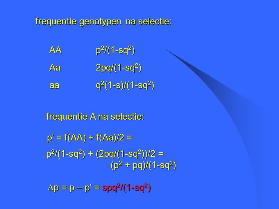 frequentie genotypen na selectie: q 2 (1-s)/(1-sq 2 ) aa 2pq/(1-sq 2 ) Aa p 2 /(1-sq 2 ) AA frequentie A na selectie: p' = f(AA) + f(Aa)/2 = p 2 /(1-sq 2 ) + (2pq/(1-sq 2 ))/2 = (p 2 + pq)/(1-sq 2 ) (p 2 + pq)/(1-sq 2 )  p = p – p' = spq 2 /(1-sq 2 )