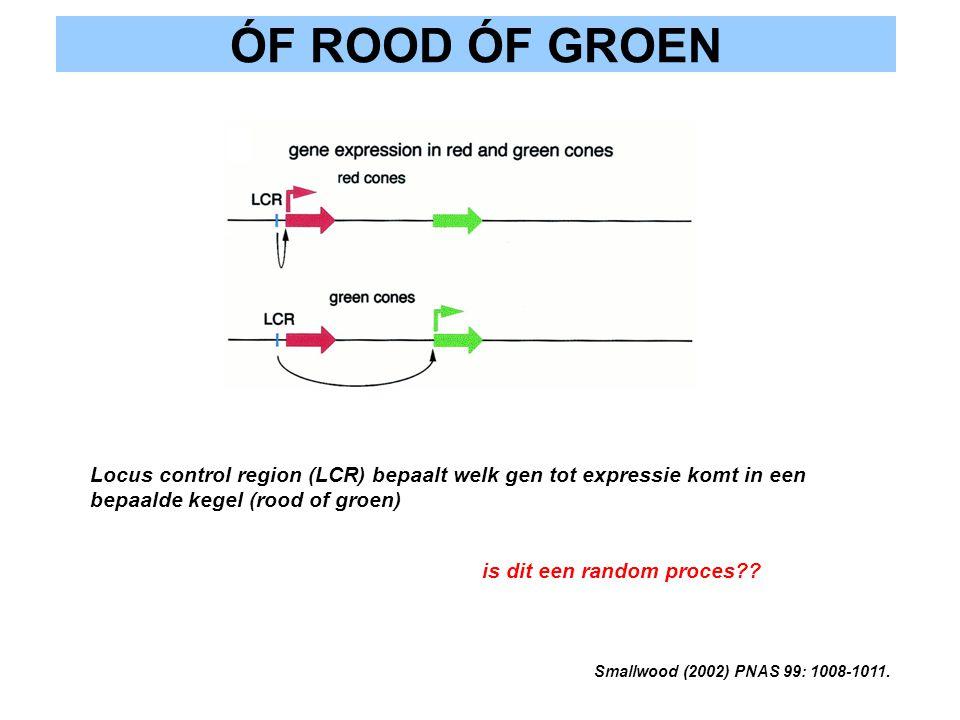 ÓF ROOD ÓF GROEN Smallwood (2002) PNAS 99: 1008-1011. Locus control region (LCR) bepaalt welk gen tot expressie komt in een bepaalde kegel (rood of gr
