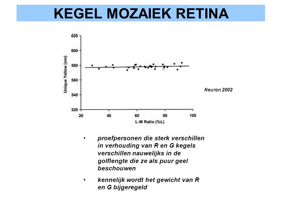 KEGEL MOZAIEK RETINA proefpersonen die sterk verschillen in verhouding van R en G kegels verschillen nauwelijks in de golflengte die ze als puur geel