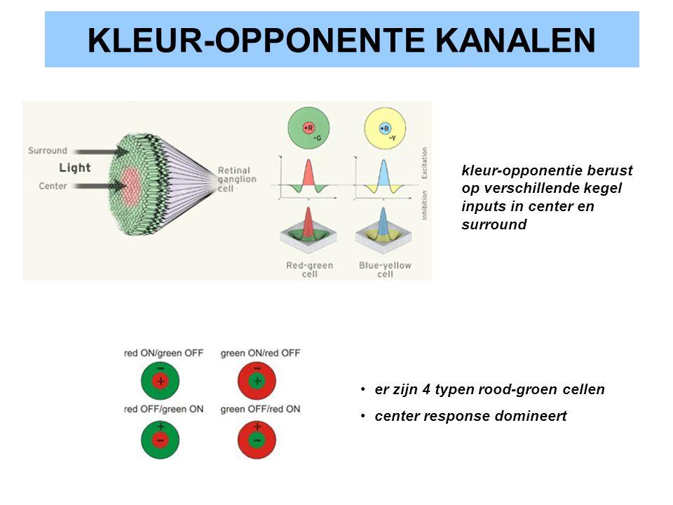 KLEUR-OPPONENTE KANALEN kleur-opponentie berust op verschillende kegel inputs in center en surround er zijn 4 typen rood-groen cellen center response