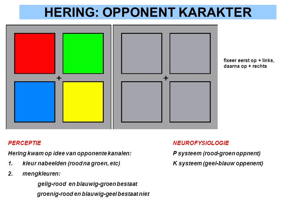HERING: OPPONENT KARAKTER PERCEPTIE Hering kwam op idee van opponente kanalen: 1.kleur nabeelden (rood na groen, etc) 2.mengkleuren: gelig-rood en bla