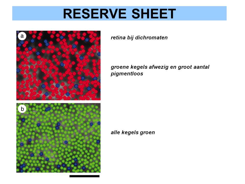 retina bij dichromaten groene kegels afwezig en groot aantal pigmentloos alle kegels groen