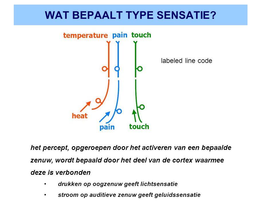 WAT BEPAALT TYPE SENSATIE? het percept, opgeroepen door het activeren van een bepaalde zenuw, wordt bepaald door het deel van de cortex waarmee deze i