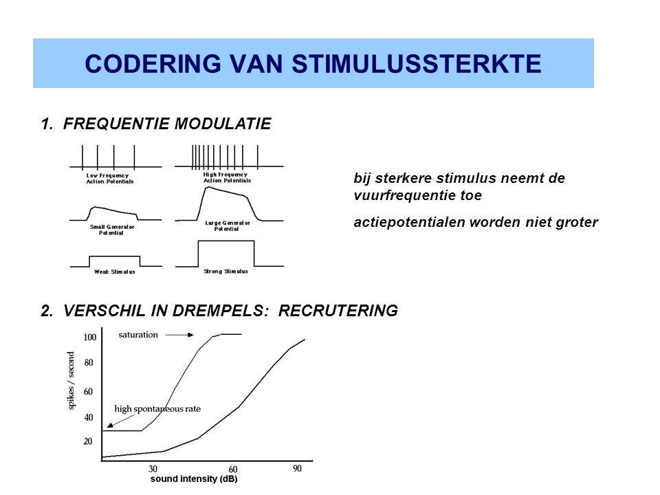 CODERING VAN STIMULUSSTERKTE 2. VERSCHIL IN DREMPELS: RECRUTERING 1. FREQUENTIE MODULATIE bij sterkere stimulus neemt de vuurfrequentie toe actiepoten