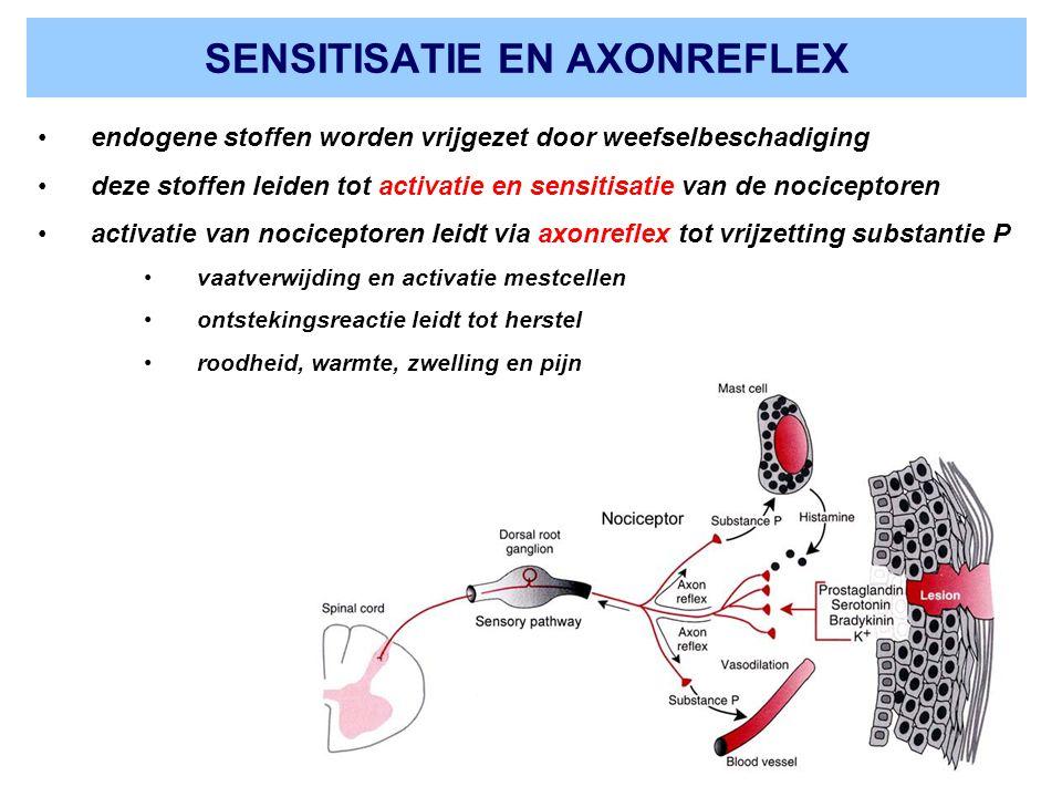 SENSITISATIE EN AXONREFLEX endogene stoffen worden vrijgezet door weefselbeschadiging deze stoffen leiden tot activatie en sensitisatie van de nociceptoren activatie van nociceptoren leidt via axonreflex tot vrijzetting substantie P vaatverwijding en activatie mestcellen ontstekingsreactie leidt tot herstel roodheid, warmte, zwelling en pijn