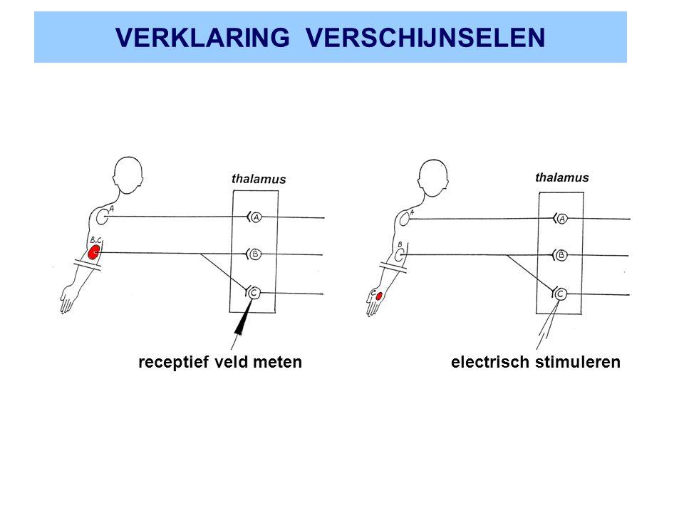 VERKLARING VERSCHIJNSELEN receptief veld meten electrisch stimuleren