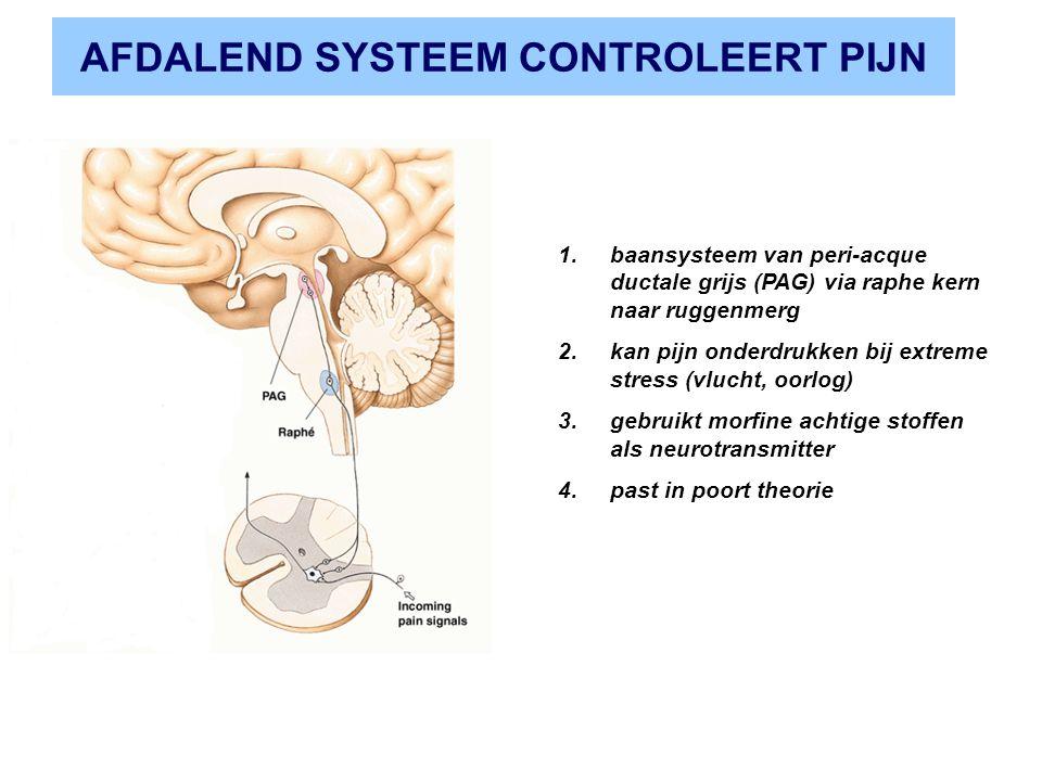 AFDALEND SYSTEEM CONTROLEERT PIJN 1.baansysteem van peri-acque ductale grijs (PAG) via raphe kern naar ruggenmerg 2.kan pijn onderdrukken bij extreme stress (vlucht, oorlog) 3.gebruikt morfine achtige stoffen als neurotransmitter 4.past in poort theorie