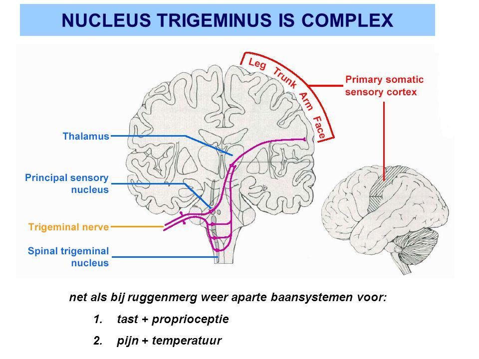 NUCLEUS TRIGEMINUS IS COMPLEX net als bij ruggenmerg weer aparte baansystemen voor: 1.tast + proprioceptie 2.pijn + temperatuur