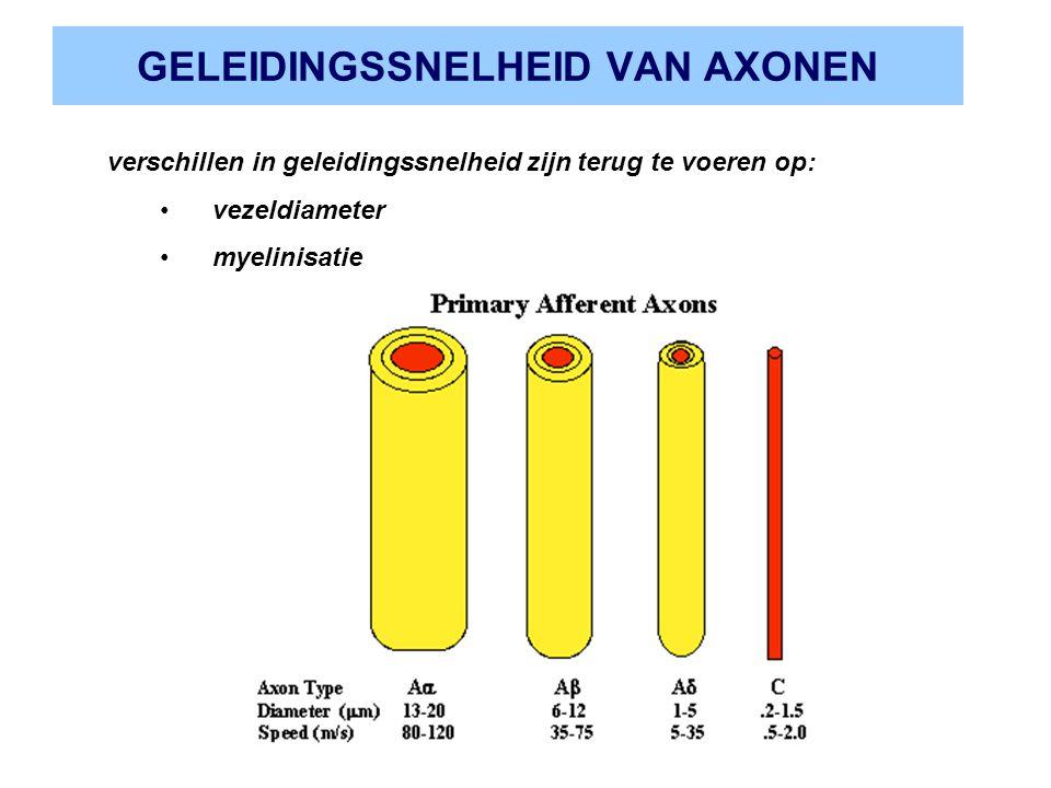 GELEIDINGSSNELHEID VAN AXONEN verschillen in geleidingssnelheid zijn terug te voeren op: vezeldiameter myelinisatie