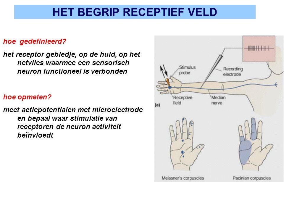HET BEGRIP RECEPTIEF VELD hoe gedefinieerd? het receptor gebiedje, op de huid, op het netvlies waarmee een sensorisch neuron functioneel is verbonden