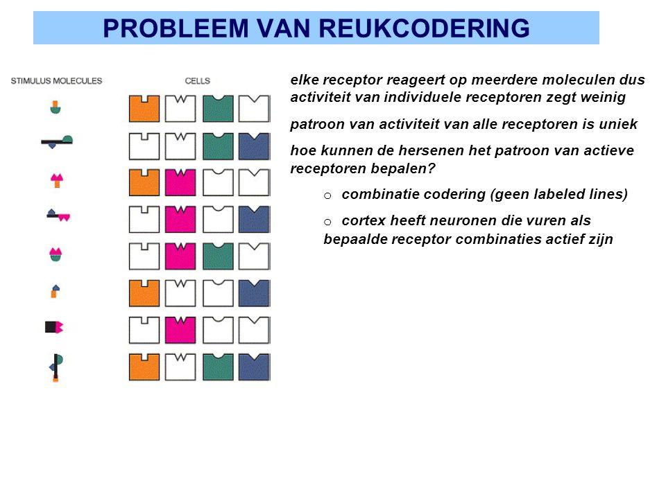 PROBLEEM VAN REUKCODERING bbbb elke receptor reageert op meerdere moleculen dus activiteit van individuele receptoren zegt weinig patroon van activite