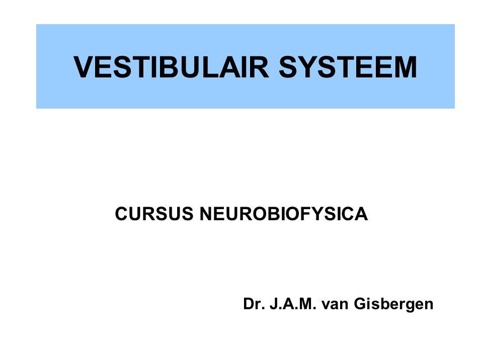 VESTIBULAIR SYSTEEM CURSUS NEUROBIOFYSICA Dr. J.A.M. van Gisbergen
