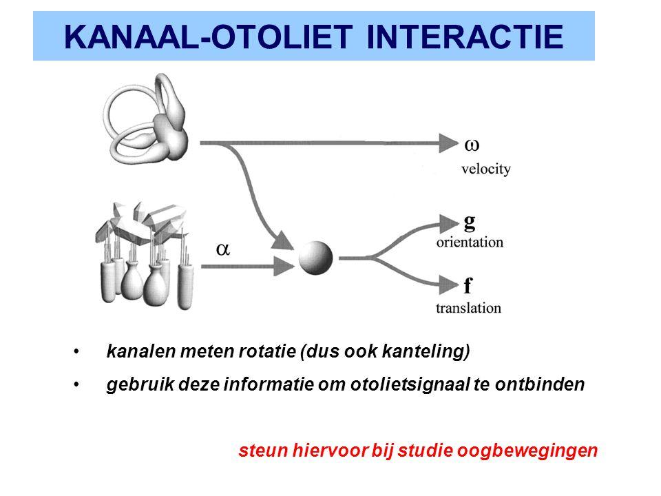 KANAAL-OTOLIET INTERACTIE kanalen meten rotatie (dus ook kanteling) gebruik deze informatie om otolietsignaal te ontbinden steun hiervoor bij studie o