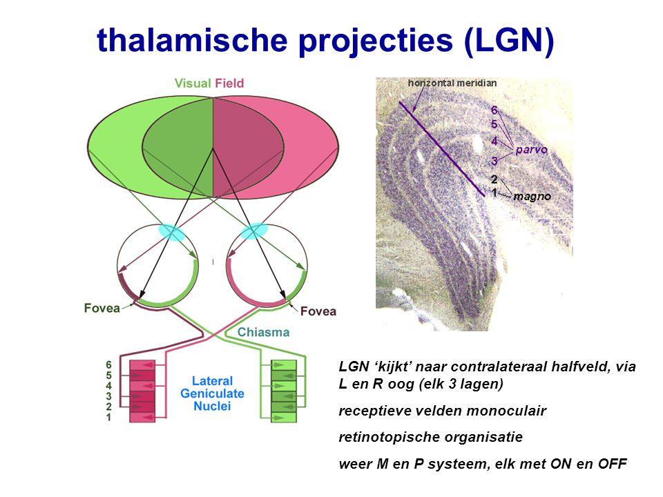 thalamische projecties (LGN) LGN 'kijkt' naar contralateraal halfveld, via L en R oog (elk 3 lagen) receptieve velden monoculair retinotopische organi