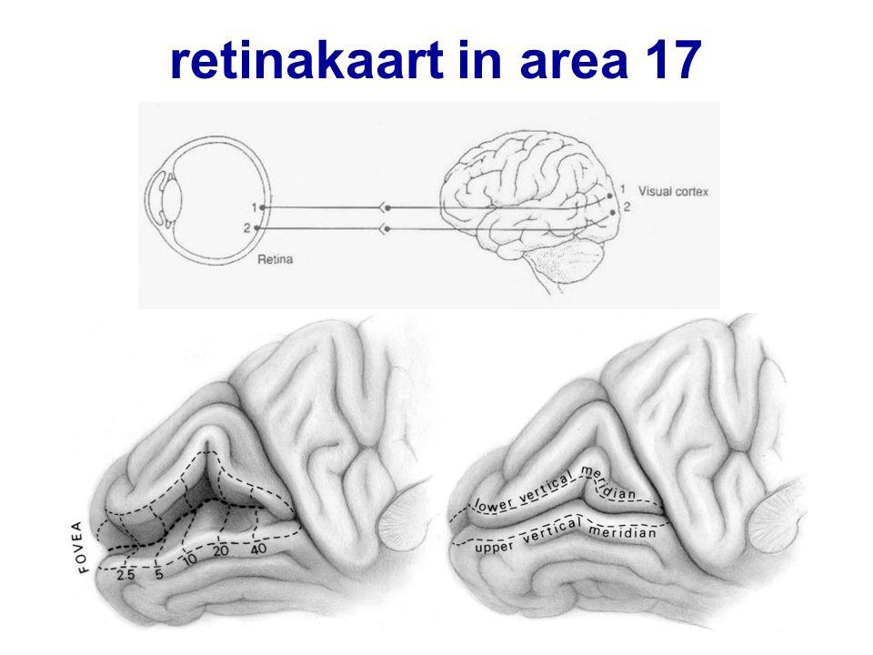 retinakaart in area 17