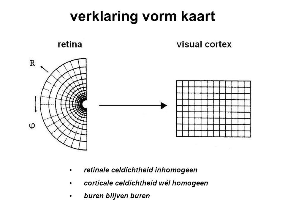 verklaring vorm kaart retinale celdichtheid inhomogeen corticale celdichtheid wél homogeen buren blijven buren