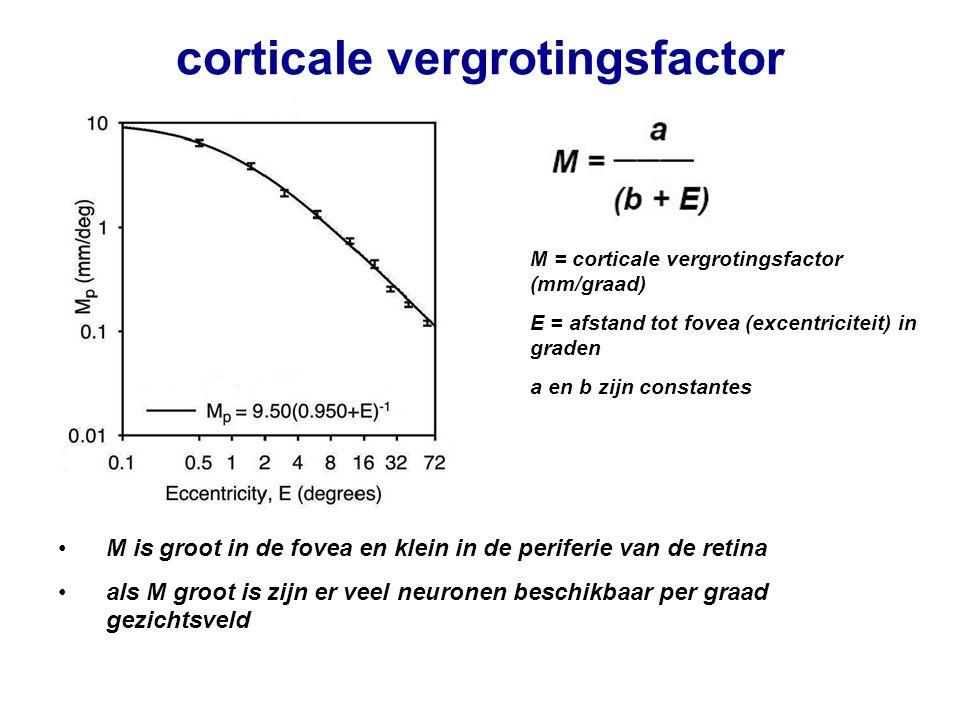 corticale vergrotingsfactor M = corticale vergrotingsfactor (mm/graad) E = afstand tot fovea (excentriciteit) in graden a en b zijn constantes M is gr