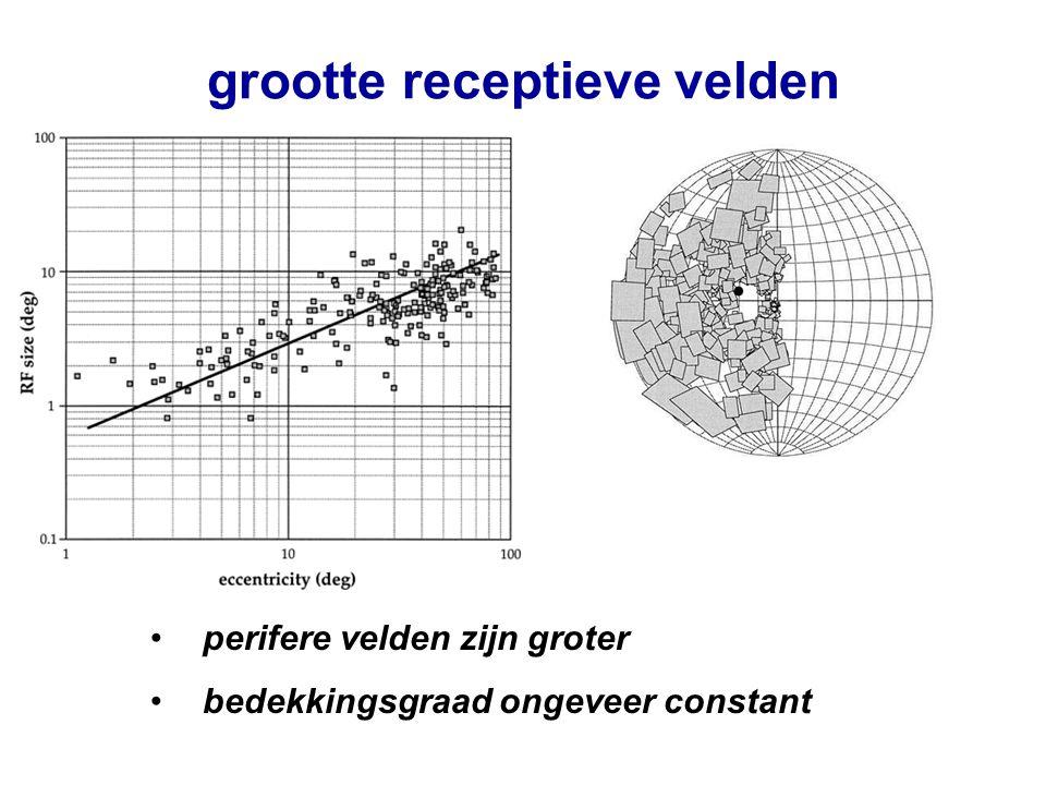 grootte receptieve velden perifere velden zijn groter bedekkingsgraad ongeveer constant