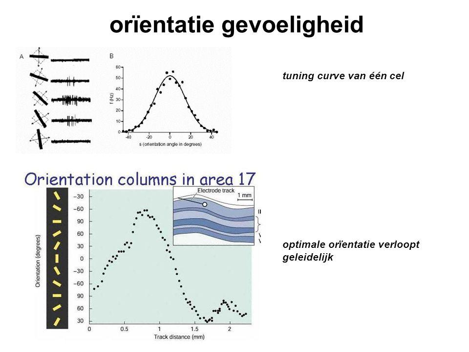 orïentatie gevoeligheid tuning curve van één cel optimale orïentatie verloopt geleidelijk