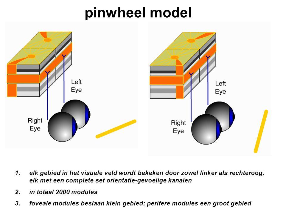 pinwheel model 1.elk gebied in het visuele veld wordt bekeken door zowel linker als rechteroog, elk met een complete set orientatie-gevoelige kanalen