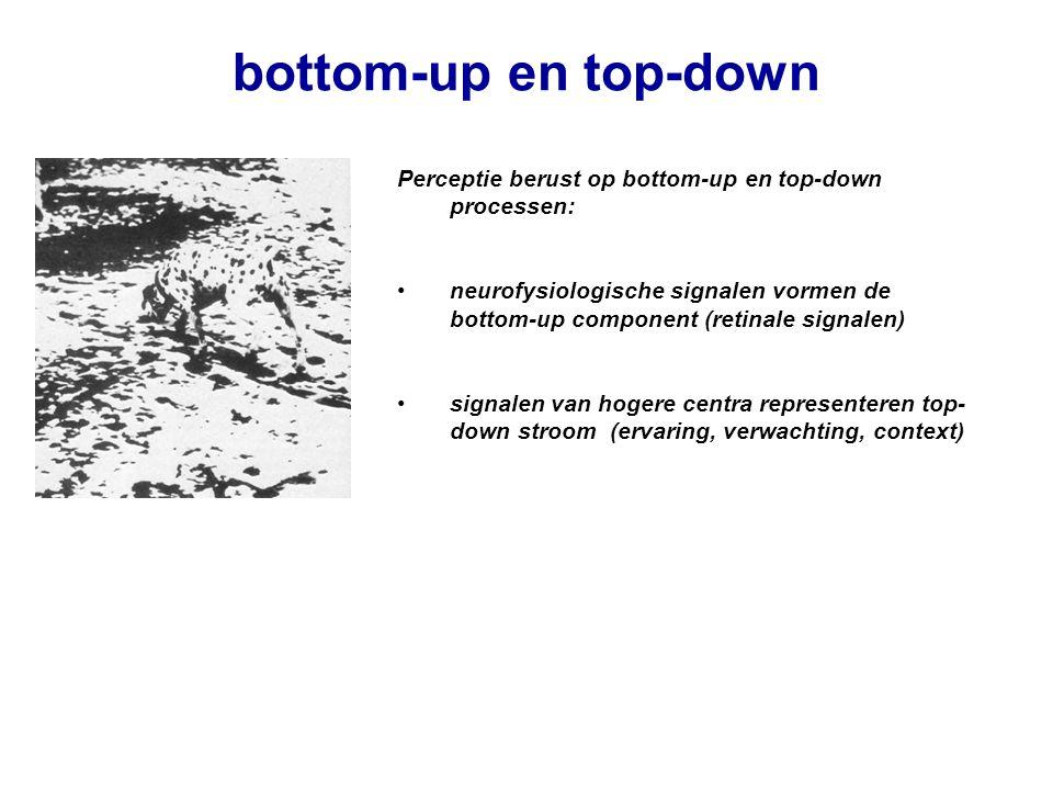 bottom-up en top-down Perceptie berust op bottom-up en top-down processen: neurofysiologische signalen vormen de bottom-up component (retinale signale