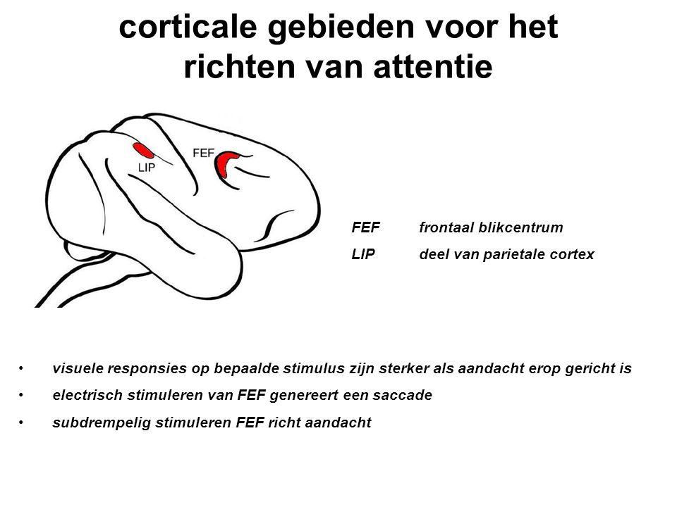 corticale gebieden voor het richten van attentie FEFfrontaal blikcentrum LIPdeel van parietale cortex visuele responsies op bepaalde stimulus zijn ste