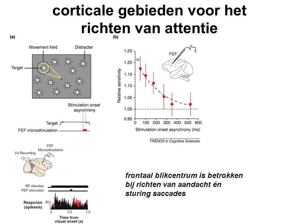 corticale gebieden voor het richten van attentie frontaal blikcentrum is betrokken bij richten van aandacht én sturing saccades