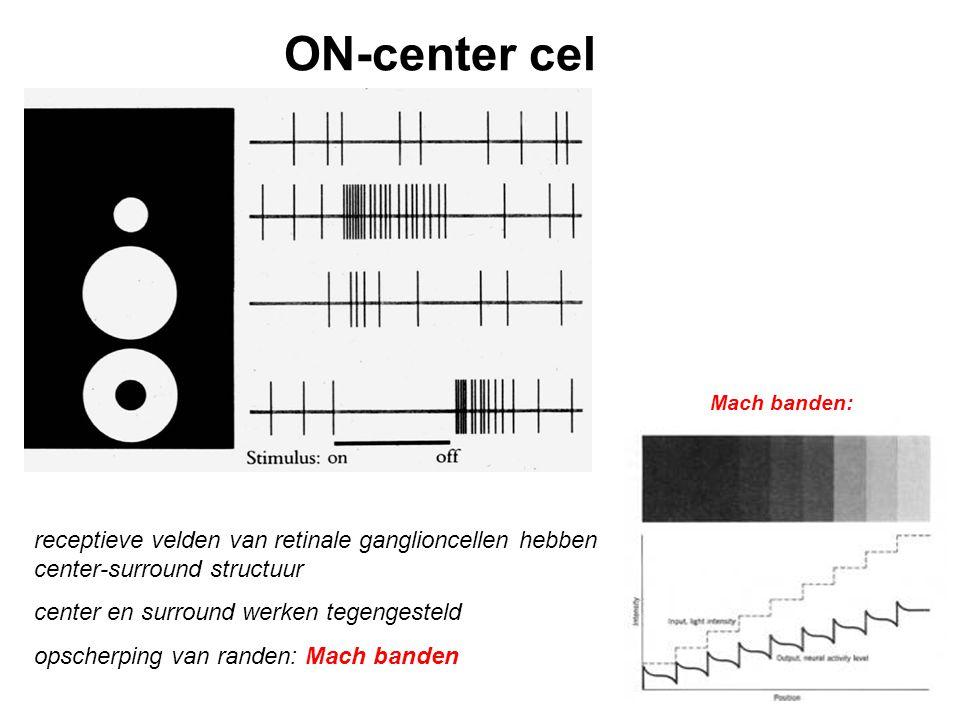 Center-surround schakeling effect van belichten center receptoren wordt rechtstreeks doorgegeven aan bipolaircel tegengesteld effect surround receptoren via horizontaalcellen
