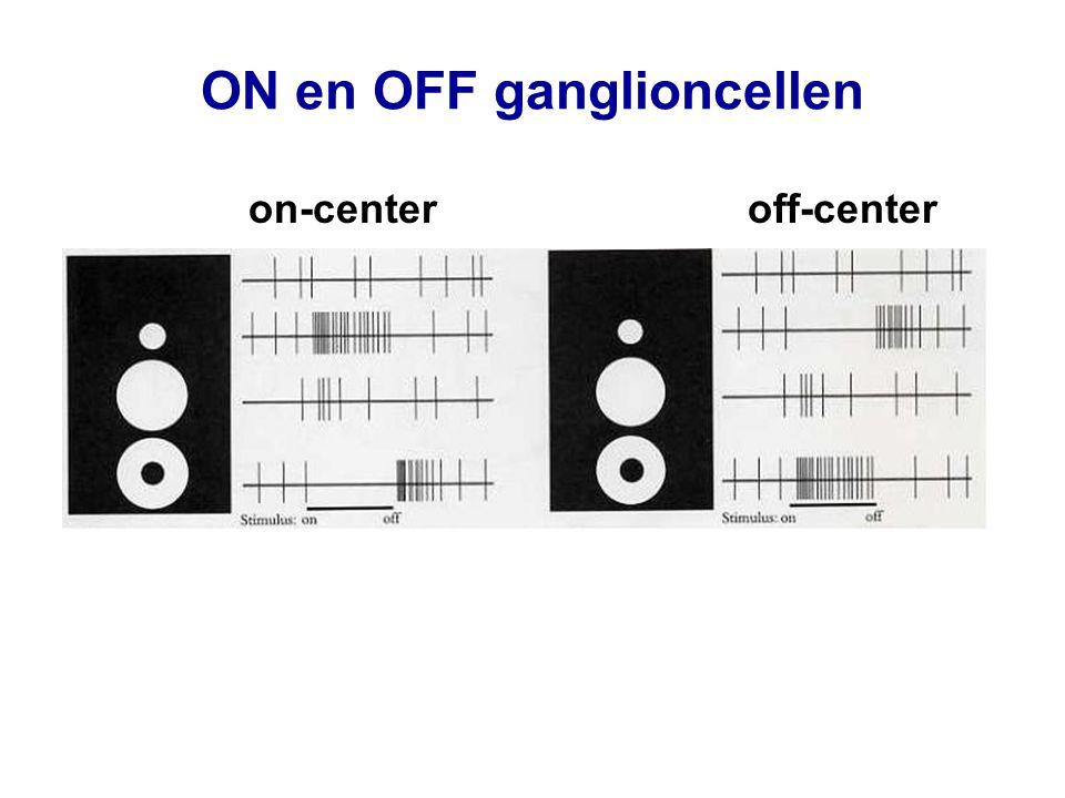 naburige neuronen hebben naburige receptieve velden kaart is sterk vervormd (fovea is uitgerekt)