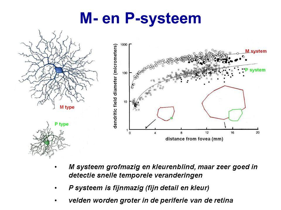 M- en P-systeem M systeem grofmazig en kleurenblind, maar zeer goed in detectie snelle temporele veranderingen P systeem is fijnmazig (fijn detail en