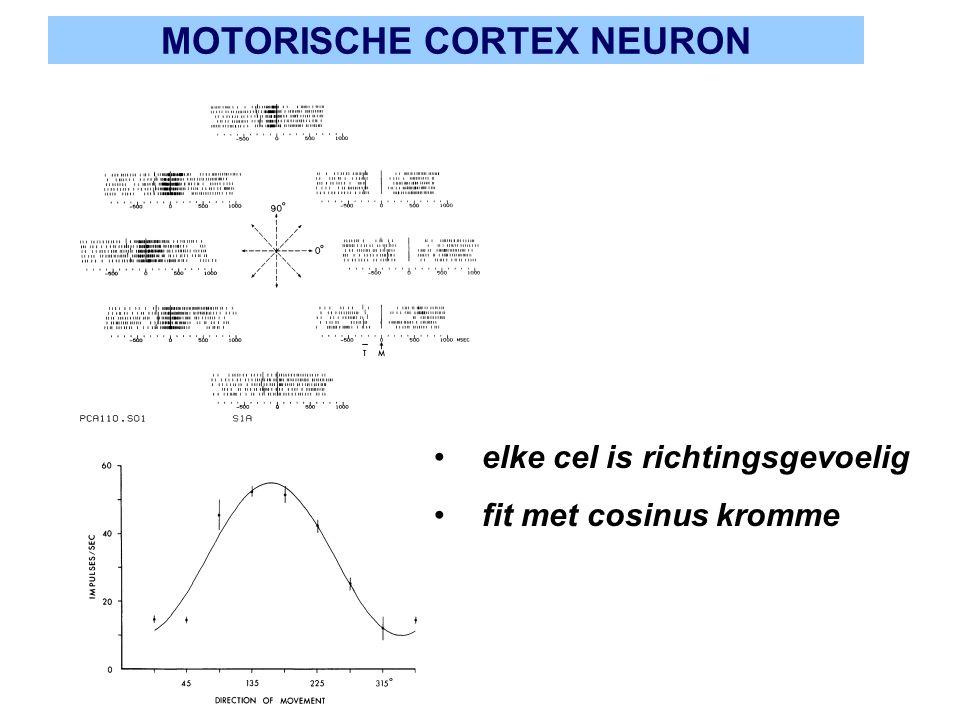 MOTORISCHE CORTEX NEURON elke cel is richtingsgevoelig fit met cosinus kromme