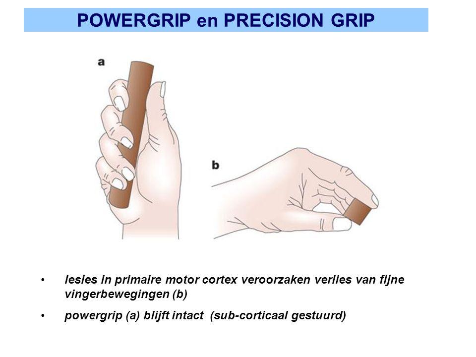 POWERGRIP en PRECISION GRIP lesies in primaire motor cortex veroorzaken verlies van fijne vingerbewegingen (b) powergrip (a) blijft intact (sub-cortic