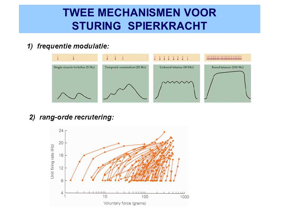 TWEE MECHANISMEN VOOR STURING SPIERKRACHT 1) frequentie modulatie: 2) rang-orde recrutering: