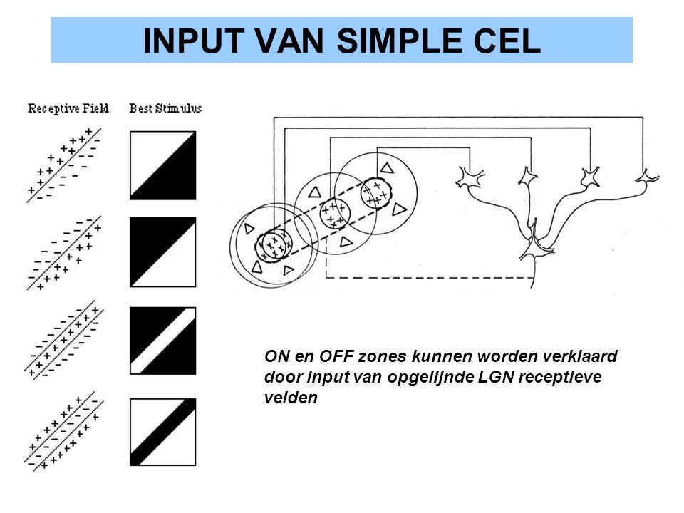 INPUT VAN SIMPLE CEL ON en OFF zones kunnen worden verklaard door input van opgelijnde LGN receptieve velden